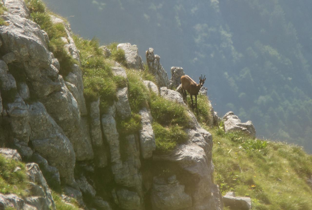 Esperienze in Altopiano – Suoni delle Dolomiti al Rifugio Pedrotti